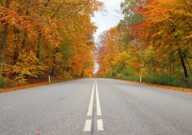 Center stripes on road in autumn forest with beautiful colors