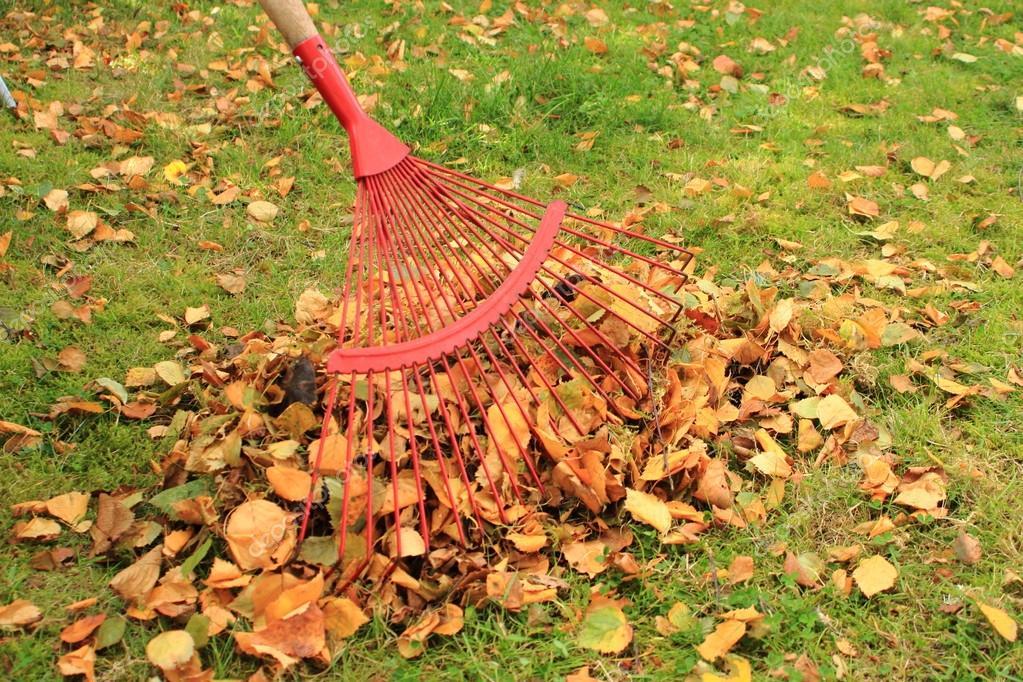 Raking leaves from the autumn garden