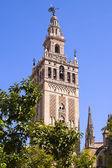 Fotografie Giralda Kathedrale