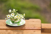 Fotografie Herbal chamomile tea
