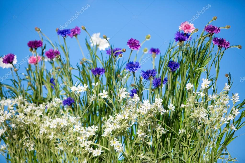 Wild Flowers Blooming over blue sky