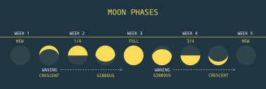 Moon Phases at Equator