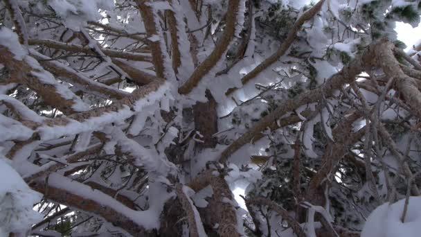 zmrazené stromy