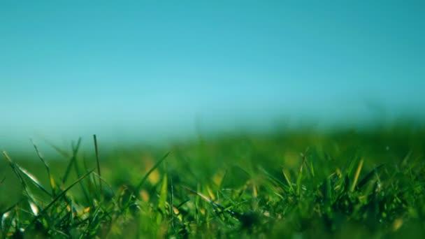 fű, fúj a szél