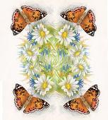 gyönyörű pillangó