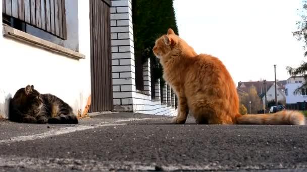kočky boj