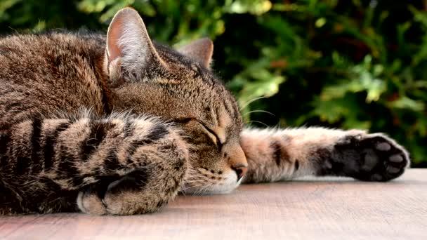 fáradt macska alszik egy kerti asztal
