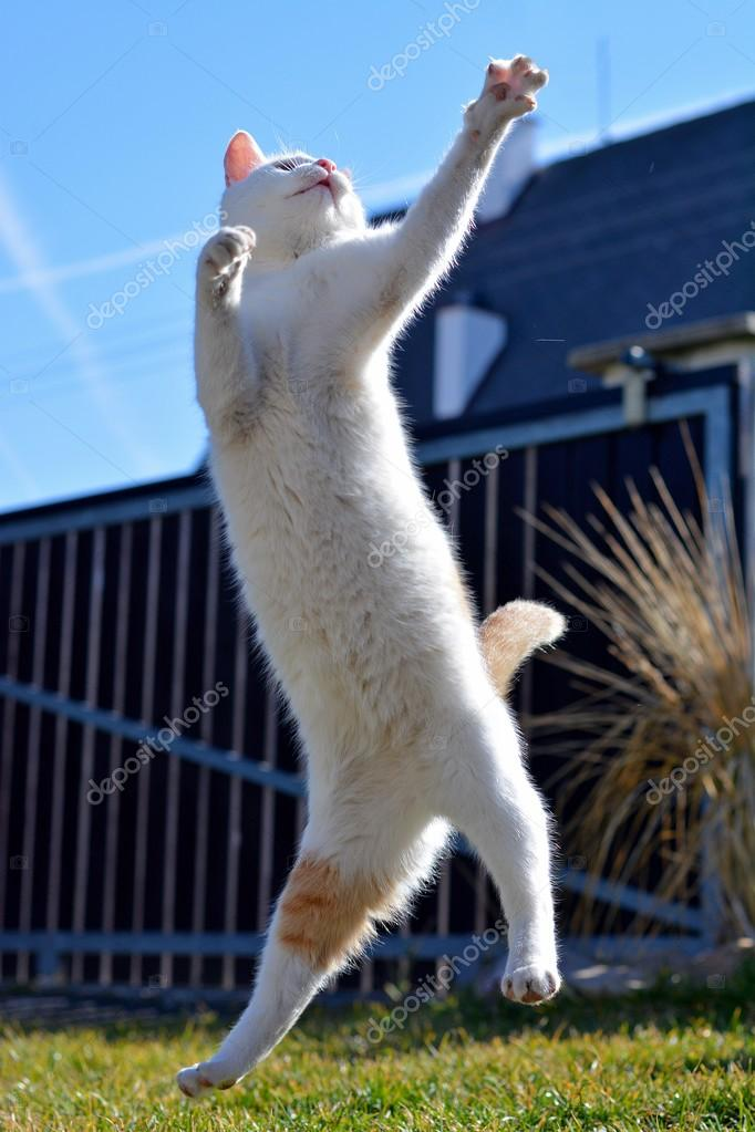 White playful cat playing and jumping in the garden