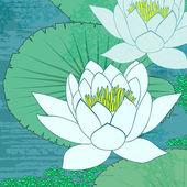 Tündérrózsa, virágok a víz