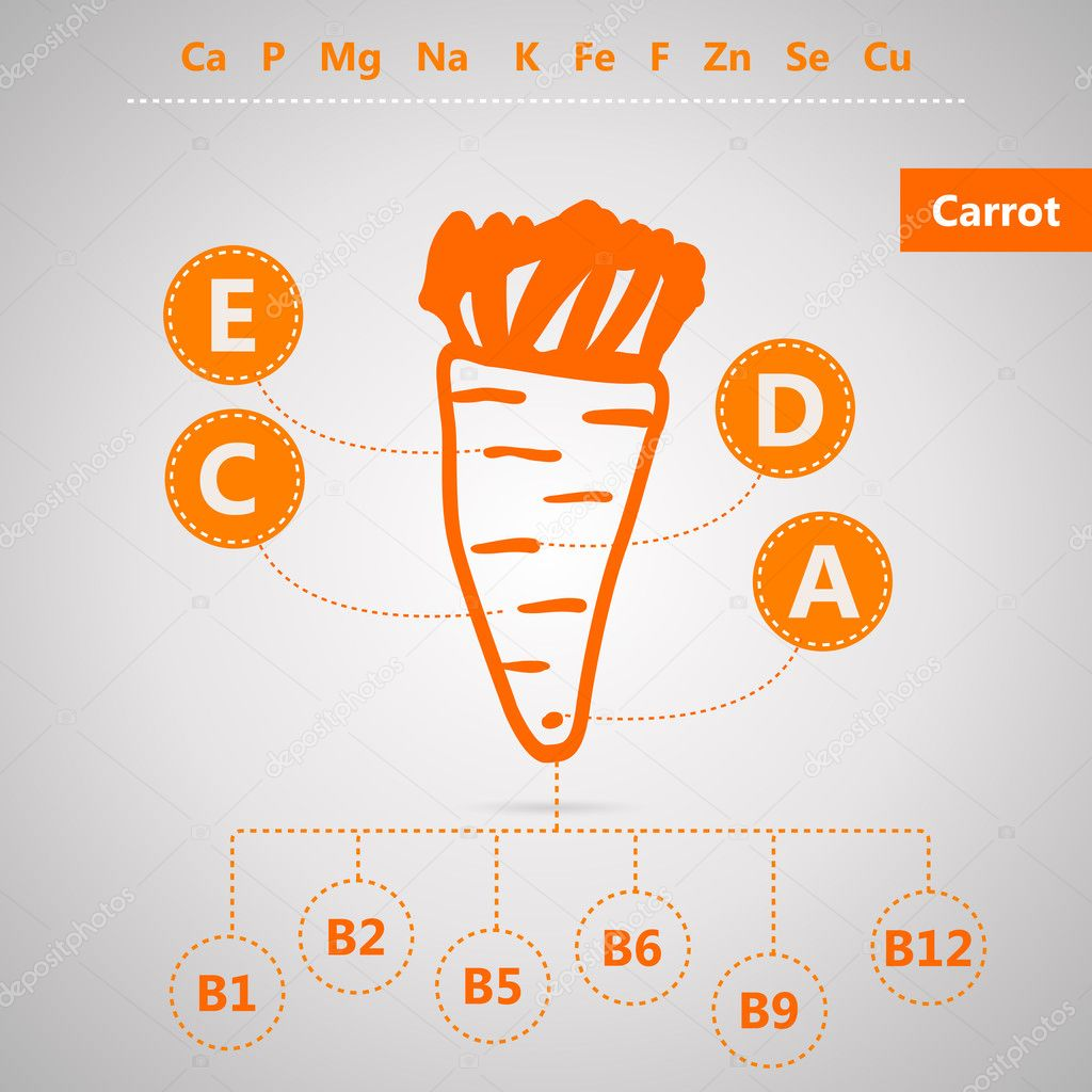 Vegetarian food. Vector infographic for content of vitamins and minerals in carrot.