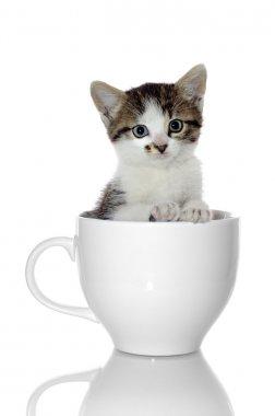 Kitten in Coffee Cup