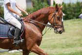 drezurní kůň