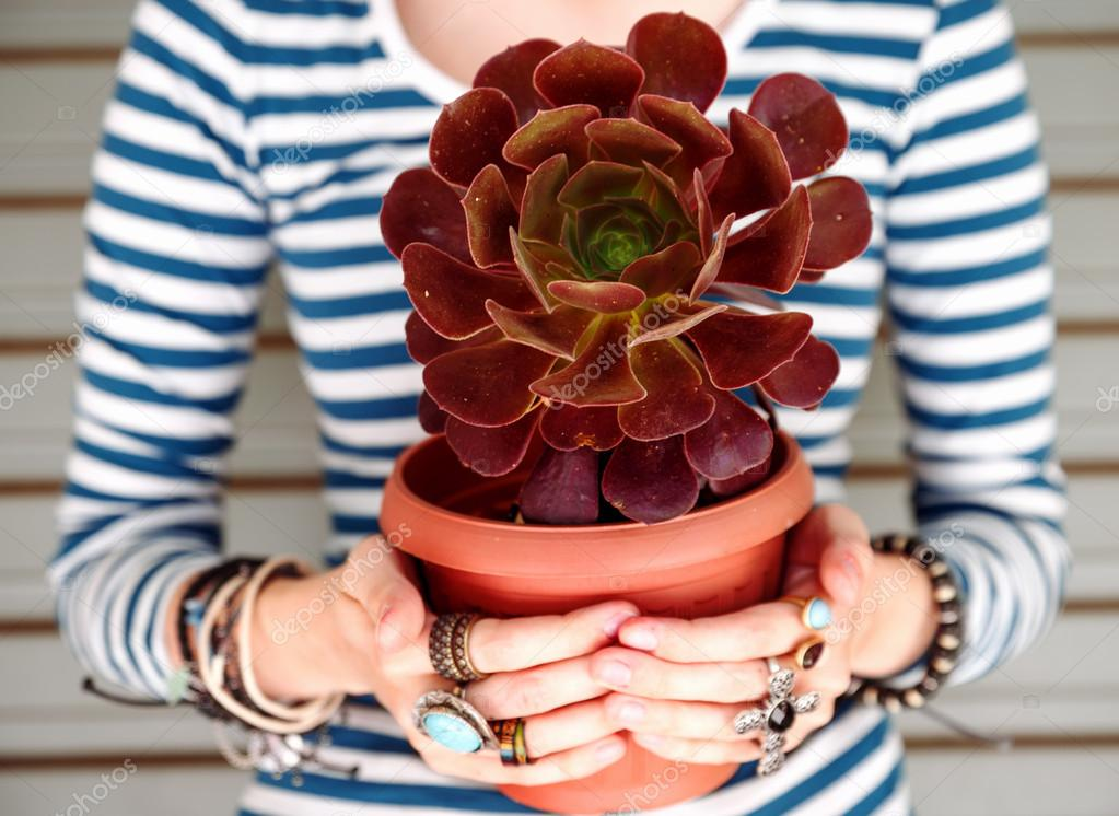 Hands holding potted succulent plant