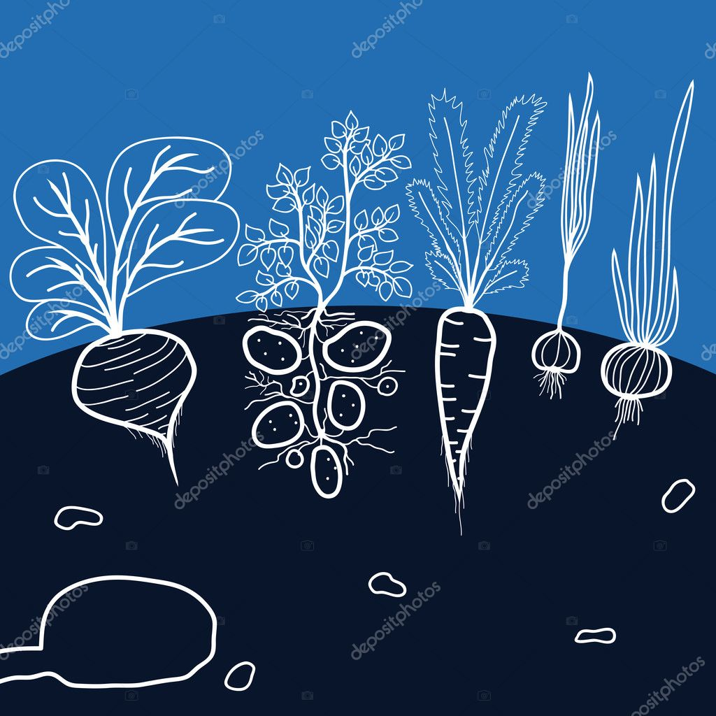 Illustration with Growing Vegetables