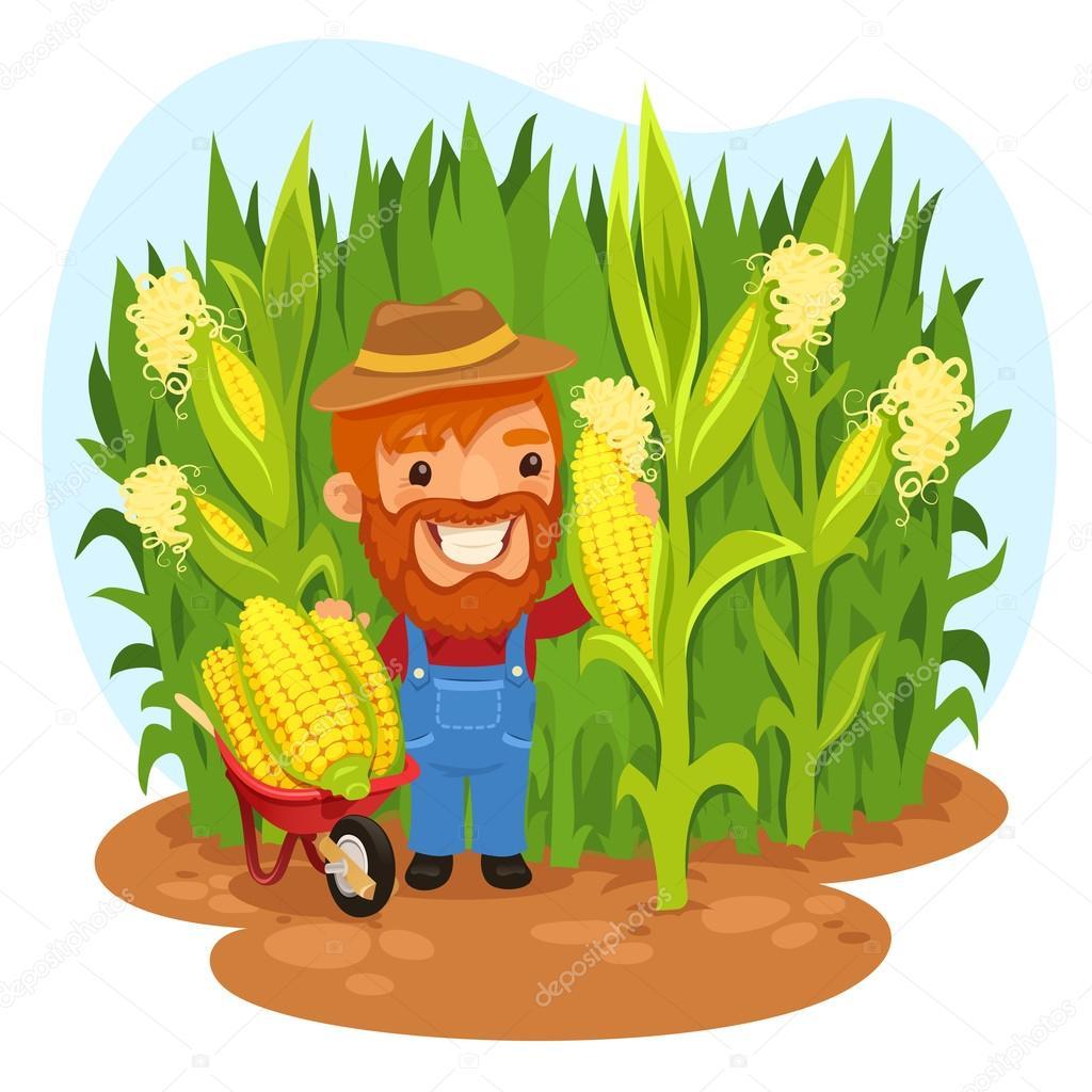 Vectores de stock de Campo de maíz, ilustraciones de Campo de maíz ...