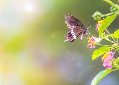 """Картина, постер, плакат, фотообои """"beautiful butterfly"""", артикул 45009105"""