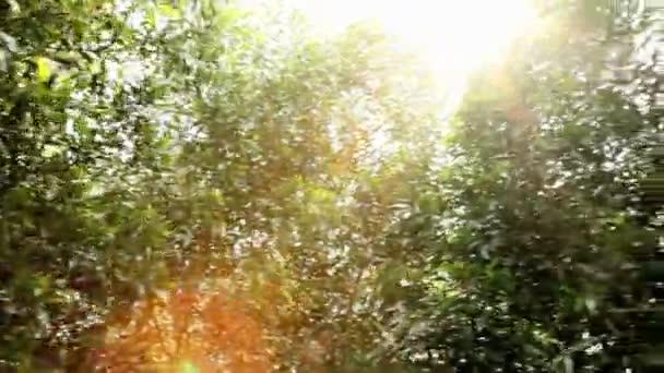 padella della giungla baldacchino
