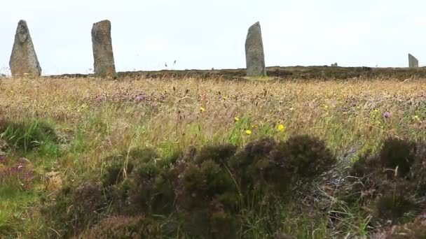 The Ring of Brodgar, Orkney, Scotland with heather and wildflowers