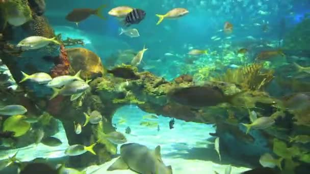 Colorful coral encrusted reefs with large numbers of tropical fish and sharks