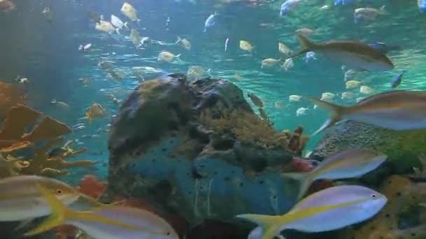 Haie schwimmen zwischen großen bunten Schwärmen tropischer Fische