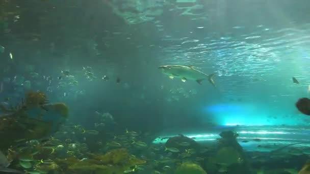 Schwärme tropischer Fische mit Haien auf Kreuzfahrt
