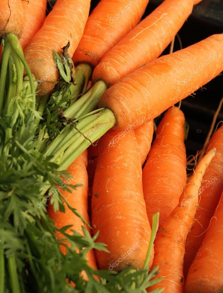 Fresh carrots beautifully arranged