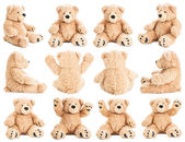 Fotografie Teddy bear in different positions