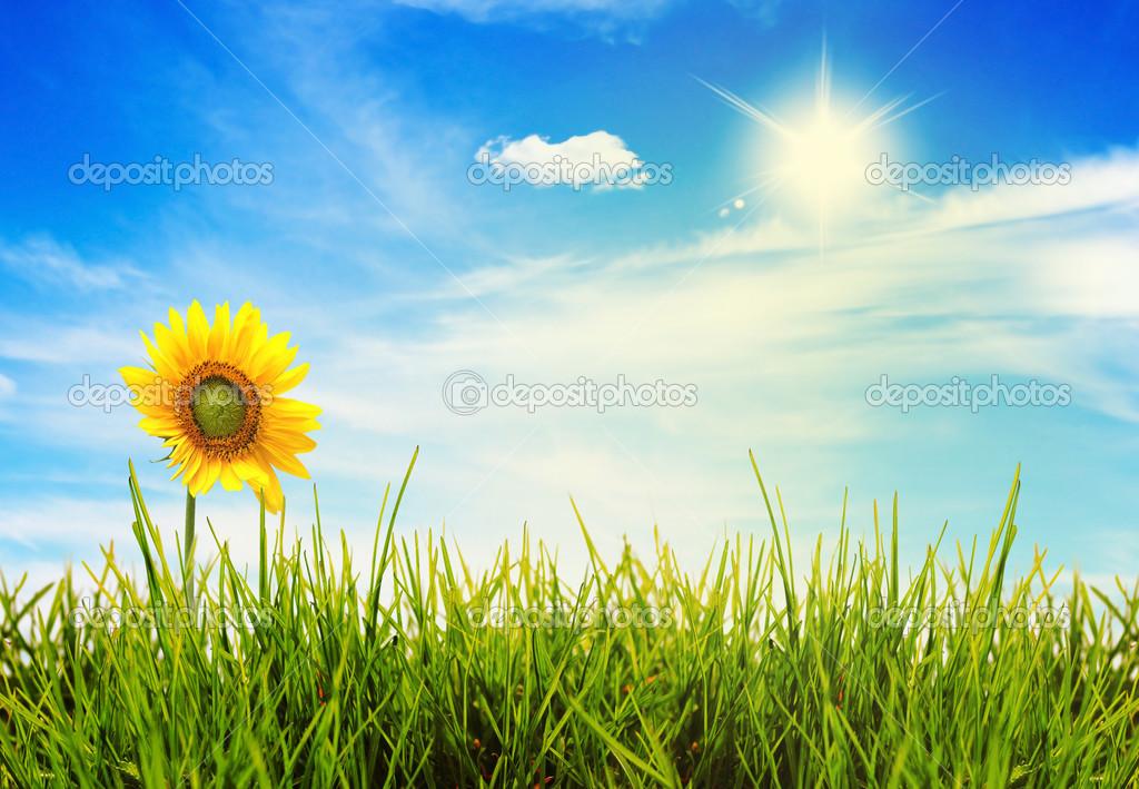 Солнечные Обои На Рабочий Стол