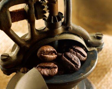 Coffee beans stock vector