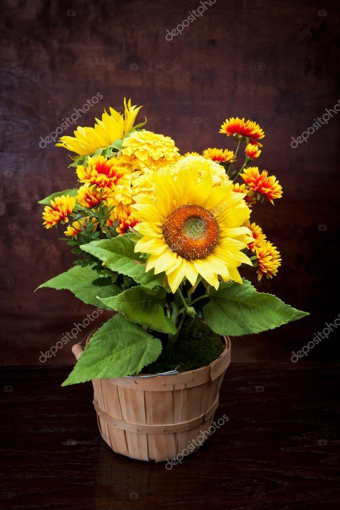 August Blumen Stockfoto C Derek Hatfielddesign Com 46404879