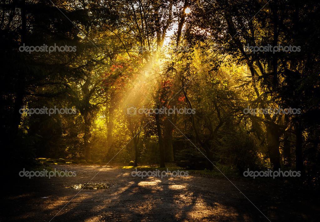 Sun rays beam
