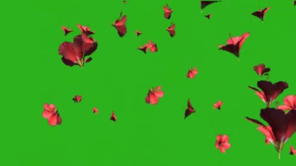 Beautiful flowers rain - green screen