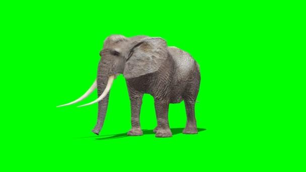 elefánt a attack - zöld képernyő