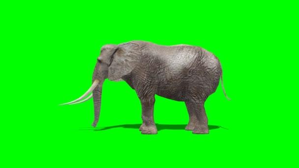 slon útok - zelená obrazovka
