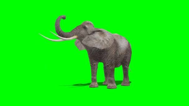 Elephant eat  - green screen