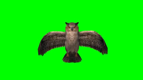 Owl is flying - green screen