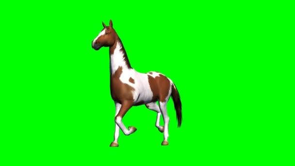 Horse runs - green screen