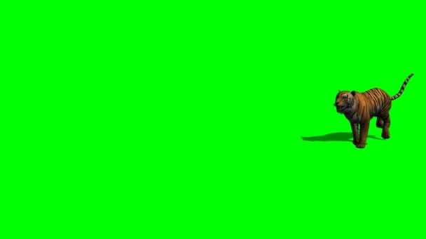 attac tygr na zelené obrazovce