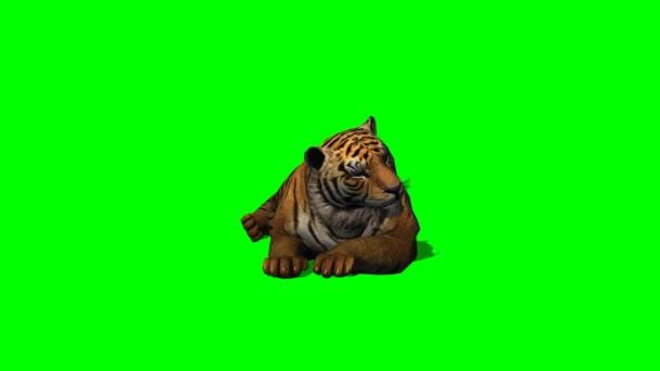Tygr nečinnosti na zelené obrazovce