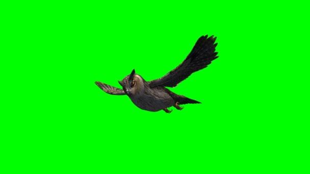 sova v mouchu na zelené obrazovce