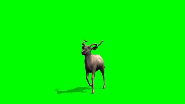 Kudu Antilopen Spaziergänge - green-screen