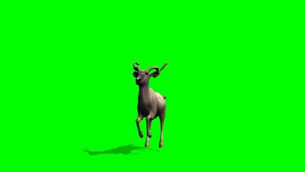 Kudu Antilopen Pisten - green-screen