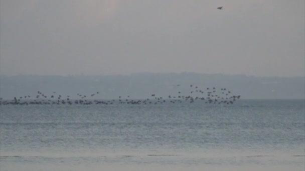 ptáci na řece