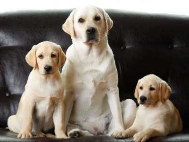 Three dogs sitting
