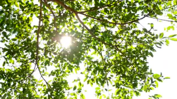 sluníčko na stromě