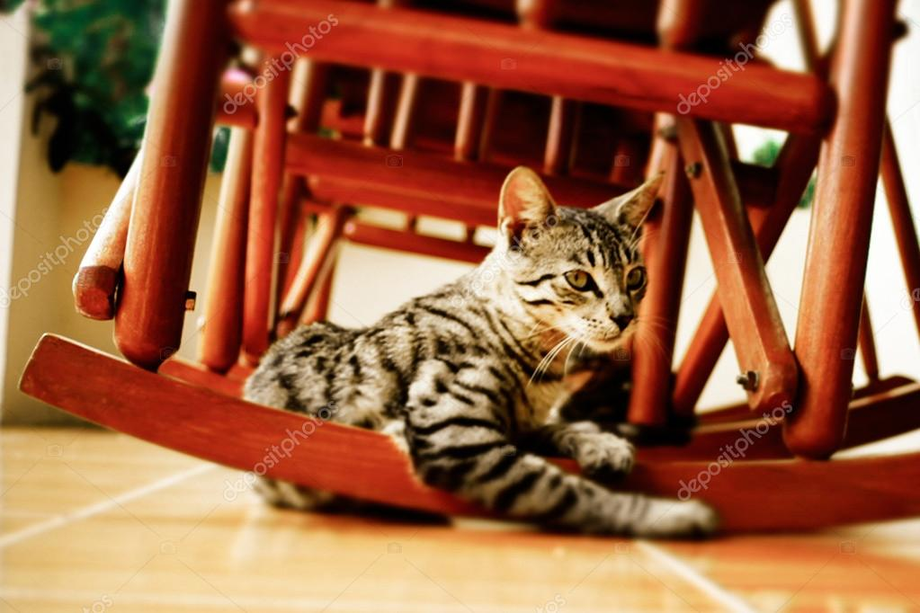 Stupendous Little Cat Under A Red Rocking Chair Stock Photo Ncnpc Chair Design For Home Ncnpcorg