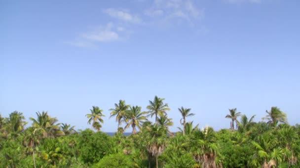 tropické palmy strom džungle