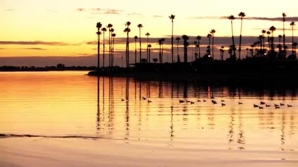 uccelli di mare tramonto Laguna