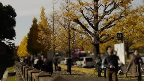 Lidé procházeli žluté Jinan dvoulaločný strom