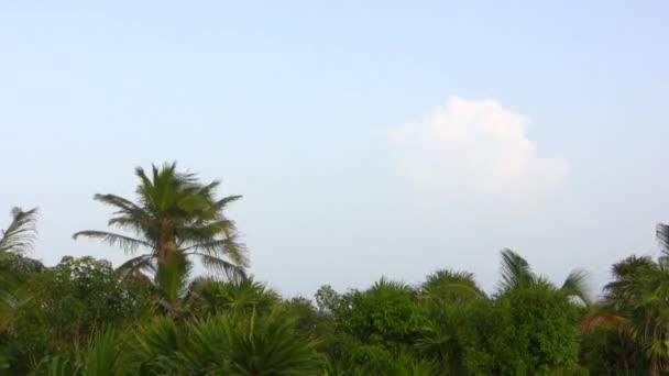 Tropical Palm Tree Jungle